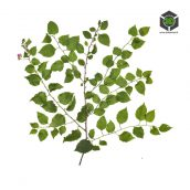 Plant_Perennials_qfgfs2_atlas_Preview (3ddanlod.ir)