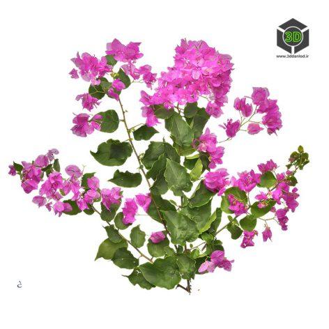 Plant_Perennials_qgdgc2_atlas_Preview (3ddanlod.ir)