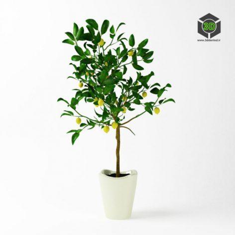 دانلود آبجکت گلدان گیاه 808