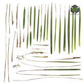 Grass_Wild_qk1lgua2_atlas_Preview (3ddanlod.ir)