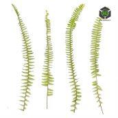 Plant_Ferns_pjvfk2_atlas_Preview (3ddanlod.ir)