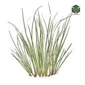 Plant_Grass_qcihF2_atlas_Preview (3ddanlod.ir)